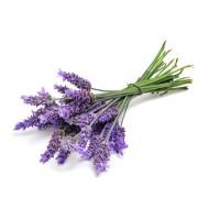 Echte Lavendel hydrolaat